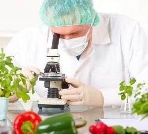 Researcher with microscope with a GMO vegetables. Genetically modified organism or GEO here transgenic plant is an plant whose genetic material has been altered using genetic engineering techniques known as recombinant DNA technology.